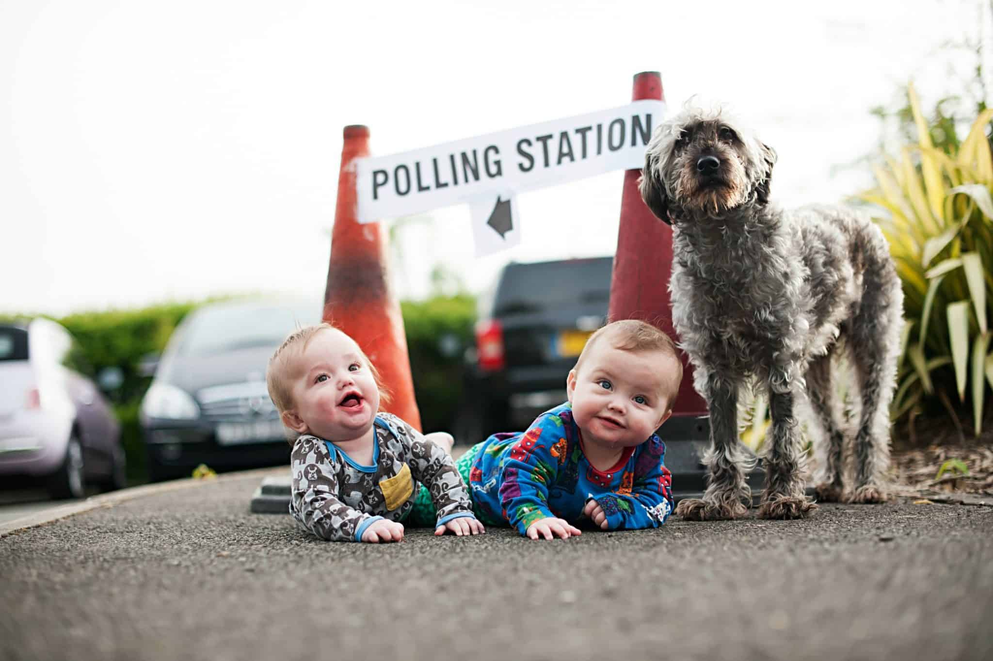 Babies and dog at polling station