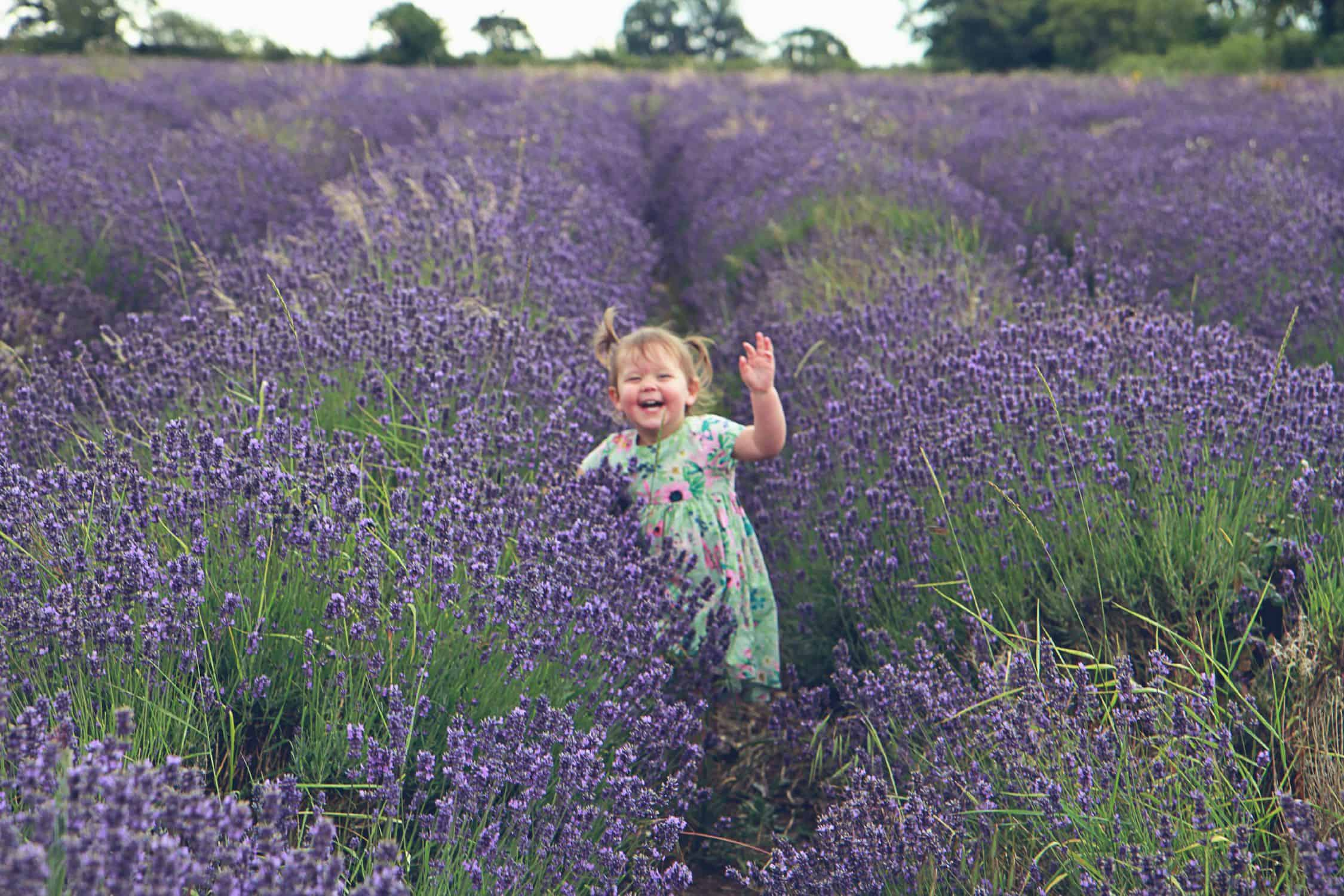 little girl running in lavender