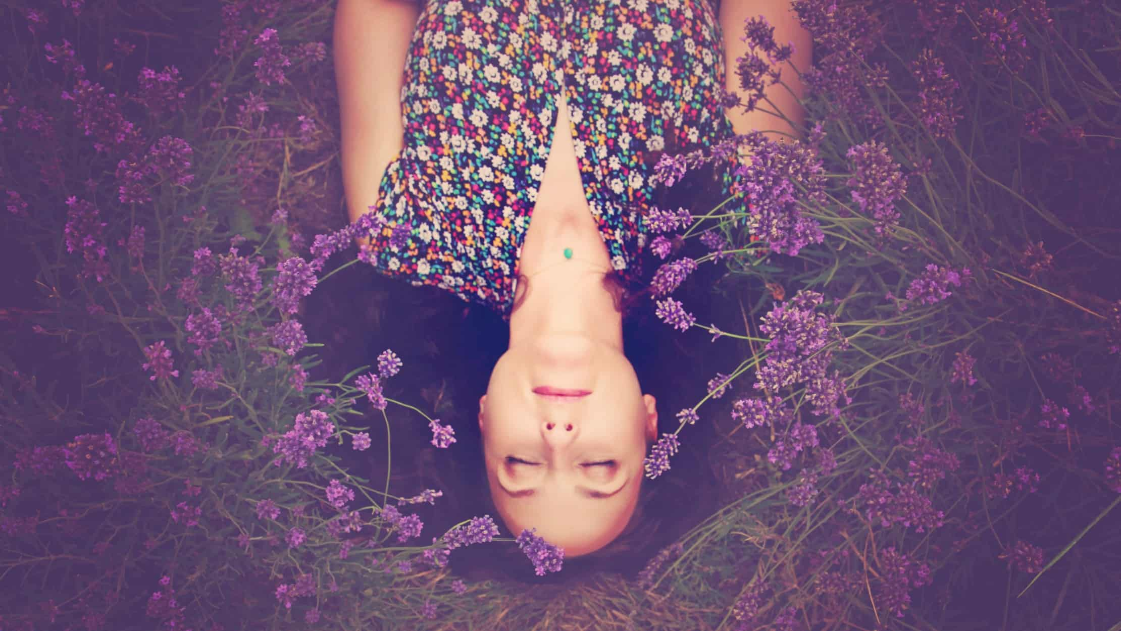 Asleep in a field full of lavender