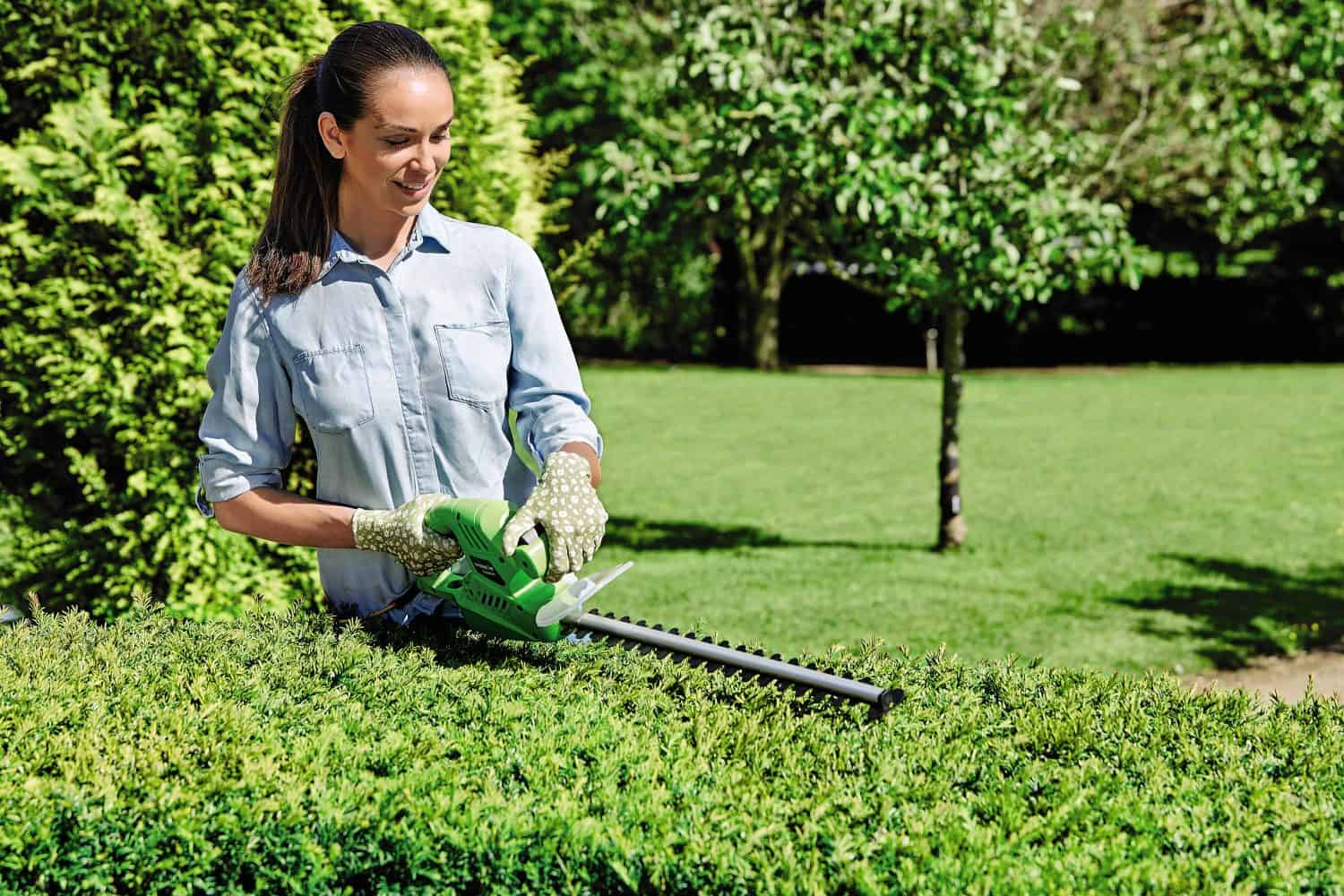Essential Electric Hedge Trimmer Aldi
