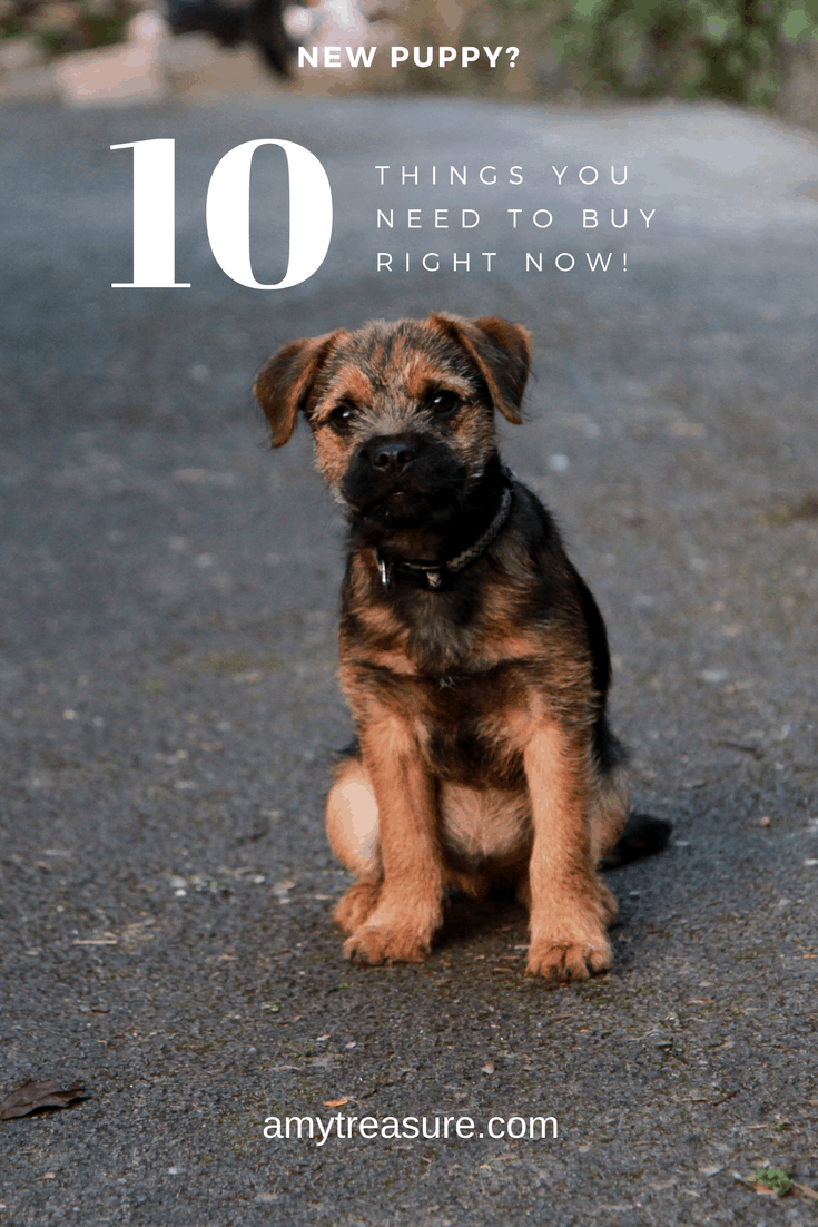 You've found the perfect puppy, now what? Click to find out those all-essential first buys with added tips detailing the things you must take care of when you bring a new puppy into the home.