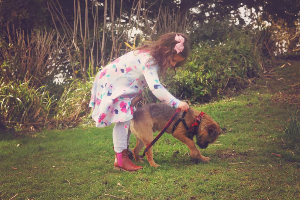 Little girl and a border terrier dog